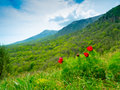 Summer mountain landscape in crimea ukraine Royalty Free Stock Image