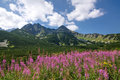 Summer in the mountains high tatras slovakia europe Stock Photography