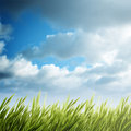 Summer natural backgrounds for your design Stock Photo