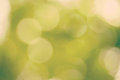 Summer nature background abstract bokeh Royalty Free Stock Image