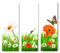 Summer nature banners with colorful flowers and butterfly. Royalty Free Stock Photo