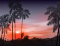 Summer night. Palm trees on the background of
