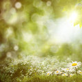 Summer noon backgrounds with beauty daisy flowers Stock Photo