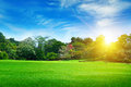 Summer park with green lawns Royalty Free Stock Photo
