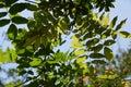 Summer park Royalty Free Stock Photo