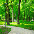 Summer park with walking paths Royalty Free Stock Photo