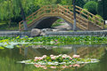 Summer park the water lily are blooming in Royalty Free Stock Image