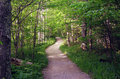 Summer Path in Woods Stock Photography