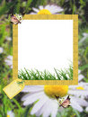Summer photo-frame / background for congratulation Royalty Free Stock Photo