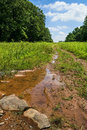 Summer puddle a in this field in sourland mountain prserve in central new jersey Royalty Free Stock Photo