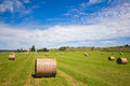 Summer rural landscape with a field and haystacks Royalty Free Stock Photos