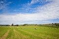 Summer rural landscape with a field and haystacks Stock Photo