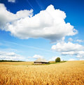Summer rural landscape high resolution photo of Stock Photo