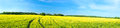 Summer rural landscape a panorama with a yellow field and the blue sky agriculture Stock Photos