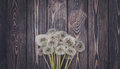 Summer rustic postcard . Dandelions and dark wood Royalty Free Stock Photo