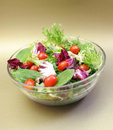 Summer Salad Stock Photography