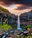 Summer scene of famous Svartifoss Black Fall Waterfall. Royalty Free Stock Photo