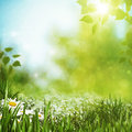 Summer seasonal backgrounds with daisy flowers for your design Royalty Free Stock Photo