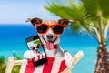 Summer selfie dog taking a in holidays Royalty Free Stock Photo