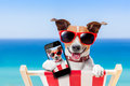 Summer selfie dog taking a in holidays Royalty Free Stock Photography