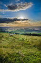 Summer sheep on a welsh hilltop shot evening from the montgomery war monument in powys and looking out over the hills of mid wales Royalty Free Stock Photo