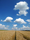 Summer sky over field path Royalty Free Stock Photo