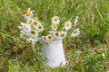 Summer or spring beautiful garden with daisy flowers Royalty Free Stock Photo