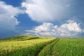 Into summer spring landscape with green grass and wheat road and stormy clouds Royalty Free Stock Photography