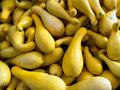 Summer Squash Royalty Free Stock Photo
