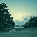 Summer on the stead rural landscape edge of village to a photo color tinting is applied Royalty Free Stock Image