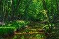 Summer Stream Royalty Free Stock Photo