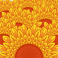 Summer Sunflower background Royalty Free Stock Photo