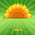 Summer sunflower poster template Royalty Free Stock Photo