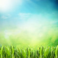 Summer sunny field Royalty Free Stock Images