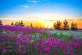 Summer sunrise over a blossoming meadow beautiful Royalty Free Stock Photos