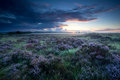 Summer sunrise over flowering heather marshes with Stock Photography