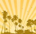 Summer sunrise with palms