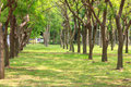Summer thailand forest with walkway green grass and trees stock photo Royalty Free Stock Images