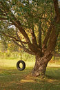 Summer Tire Swing Stock Image