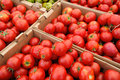 Summer Tomatoes Stock Images