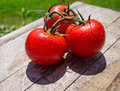 Summer Tomatoes Royalty Free Stock Photo