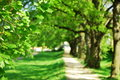 Summer tree alley Stock Photography