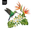 Summer Tropical Design with Hummingbird and Exotic Flowers. Floral Background with Tropic Bird, Plumeria and Palm Leaves Royalty Free Stock Photo