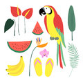 Summer tropical graphic elements. Parrot bird. Jungle floral illustrations, palm leaves, orchid, flower, watermelon,banana fruit Royalty Free Stock Photo