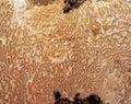 Summer truffle's vein Stock Photo
