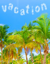 Summer vacation concept beautiful fresh green palm tree on blue sky background luxury tropical resort panoramic landscape paradise Stock Photo