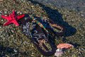 Summer vacation concept-flipflops with sea star and shells on the beach Royalty Free Stock Photo