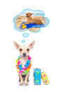 Summer vacation dog Royalty Free Stock Photo