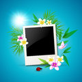 Summer vector background with photo and flowers Stock Image