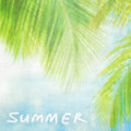 Summer vintage background natural palm tree border textured blur card text space holidays vacation and travel concept Stock Image